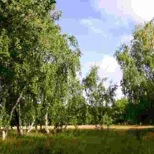 лес родного края